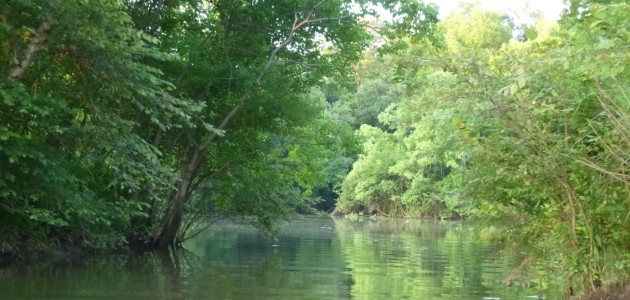 Up the Alabama River … With a Paddle